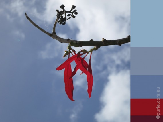 Blue sky with red leaf